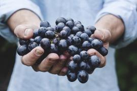 Greenbelt Blueberries